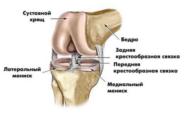 Про коленные суставы